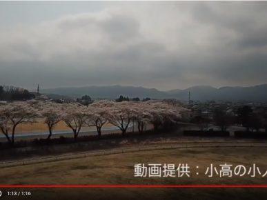 2018.4.2雲雀ヶ原陸上競技場(小高の小人様提供)
