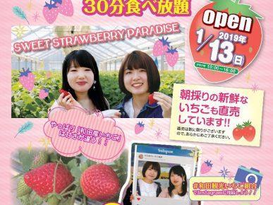 2019和田観光苺組合