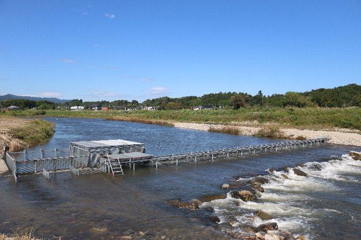 【楢葉町】木戸川の鮭