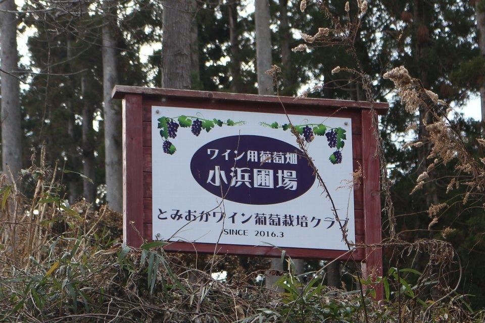 とみおかワイン葡萄栽培クラブ ワイン用葡萄畑 小浜圃場